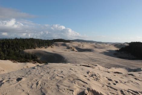 Dunes in Honeyman State Park