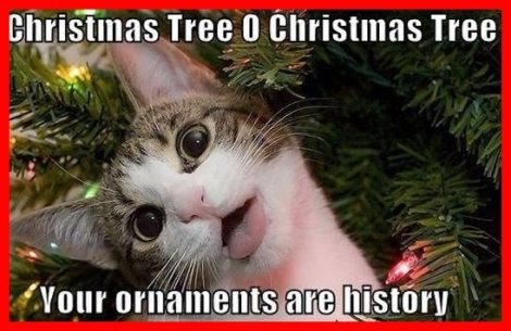 A Christmas cat picture, because of course